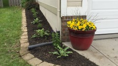 Designing Dawn - side yard landscape